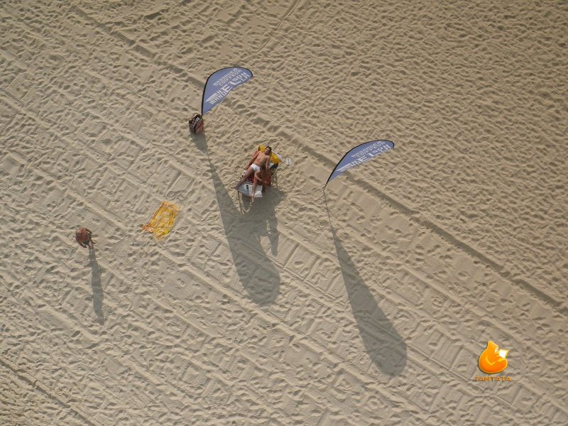 Fauna en la playa de Ipanema